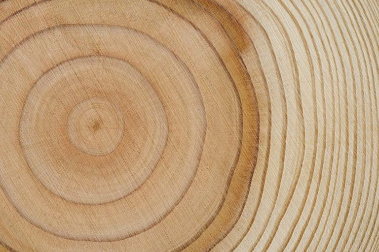 Tree rings wood texture background representing people analytics maturity curve
